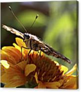 Butterfly 004 Canvas Print