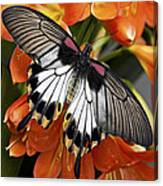 Butterfly 006 Canvas Print