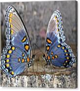 Butterfly 007 Canvas Print