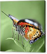 Butterfly 008 Canvas Print
