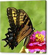 Butterfly 011 Canvas Print
