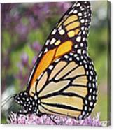 Butterfly 024 Canvas Print