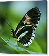 Butterfly 026 Canvas Print