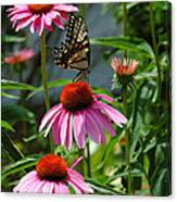 Butterfly 1 2013 Canvas Print