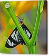 Butterfly An3597-13 Canvas Print