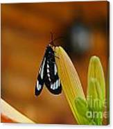 Butterfly An3606-13 Canvas Print