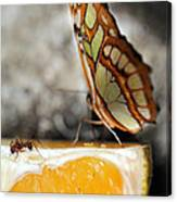 Butterfly And Ant Canvas Print
