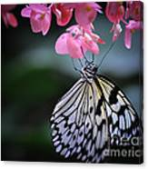 Butterfly And Blossoms Canvas Print