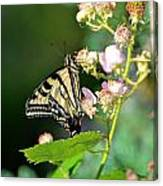 Butterfly And Flower. Canvas Print