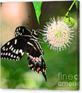 Butterfllies And The Crystal Balls Canvas Print
