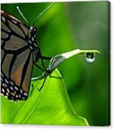 Butterfly And Water Canvas Print