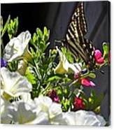 Swallowtail Butterfly On White Petunia Flower Canvas Print
