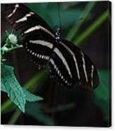 Butterfly Art 2 Canvas Print