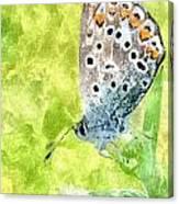 Butterfly Art Prints Canvas Print