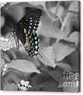 Butterfly Art Wings Together Canvas Print