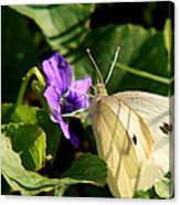 Butterfly At Flower Canvas Print