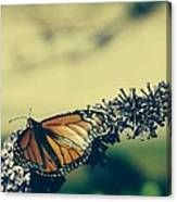 Butterfly At Royal Botanical Gardens Canvas Print