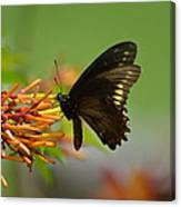 Butterfly Away Canvas Print