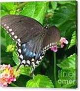 Butterfly Ballot Canvas Print