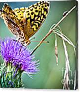 Butterfly Beauty And Little Friend Canvas Print