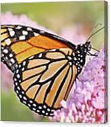 Butterfly Beauty-monarch II  Canvas Print