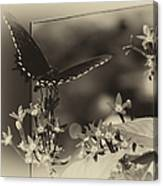 Butterfly Black 06 In Heirloom Finish Canvas Print