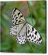 Butterfly Charm Canvas Print