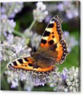 10088 Small Tortoiseshell Butterfly Canvas Print