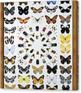Butterfly Collection Canvas Print