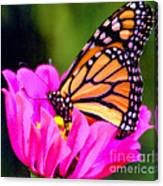 Butterfly Cup Canvas Print