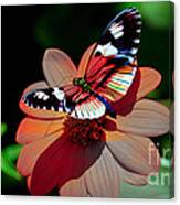 Butterfly Dont Fly Away Canvas Print