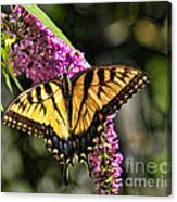 Butterfly - Eastern Tiger Swallowtail Canvas Print