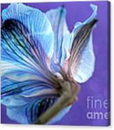 Butterfly Flower Canvas Print