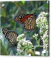 Butterfly Garden - Monarchs 01 Canvas Print