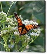 Butterfly Garden - Monarchs 09 Canvas Print