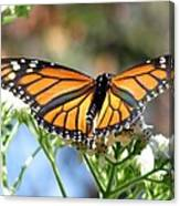 Butterfly Garden - Monarchs 13 Canvas Print
