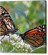 Butterfly Garden - Monarchs 17 Canvas Print