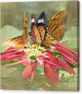 Butterfly Gathering Canvas Print