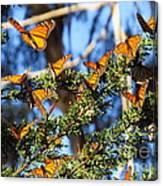 Butterfly Goodbye Canvas Print