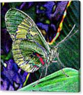 Butterfly Green Canvas Print