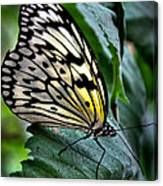 Butterfly - Green Leaf Canvas Print
