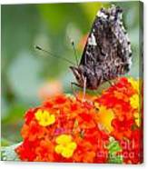Butterfly Hanging Out On Wildflowers Canvas Print