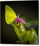 Butterfly I Canvas Print