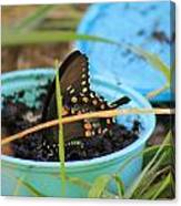 Butterfly In A Cup Canvas Print