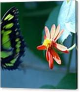 Butterfly In Flight Canvas Print