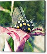 Butterfly In Flower Canvas Print