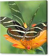 Butterfly In Motion #1967 Canvas Print