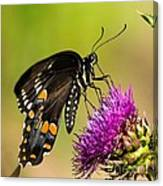 Butterfly In Nature Canvas Print