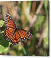 Butterfly In The Everglades Canvas Print