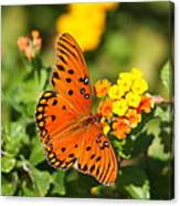 Butterfly In The Glades - Gulf Fritillary Canvas Print